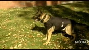 Jake the Vet: Bullet-proof vests for K-9s